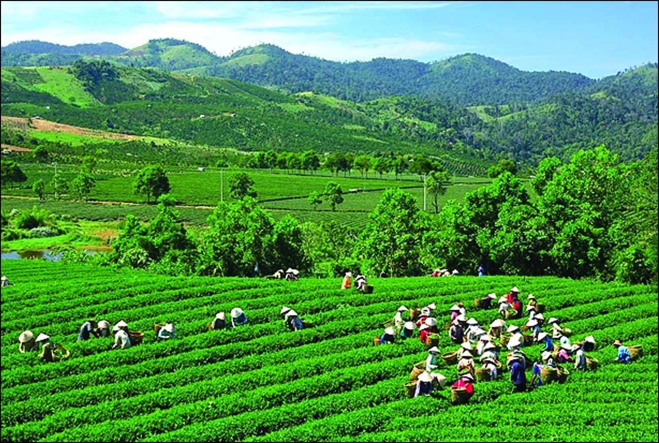 Bán nhớt Motul chất lượng cao tại Thái Nguyên